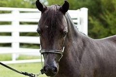 Horses2011-(17)