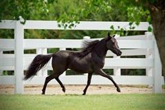 Horses2011-(18)