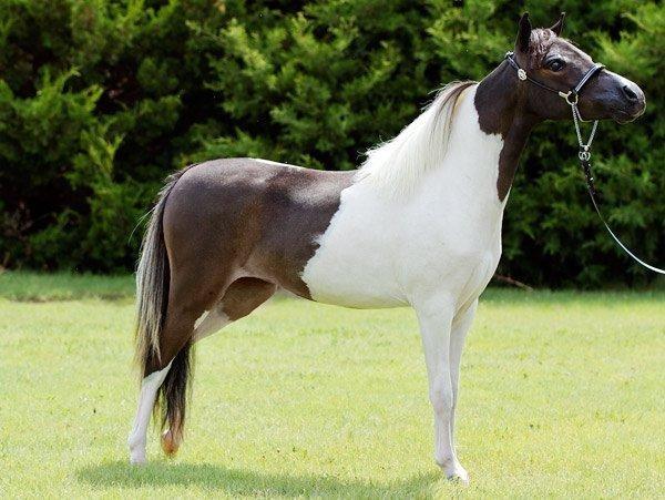Horses2011-(19)