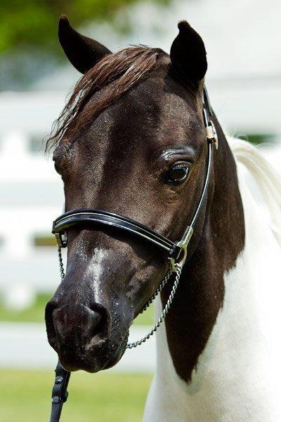 Horses2011-(24)