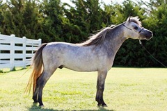 Horses2011-(45)
