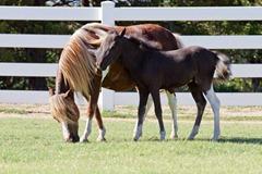 Horses2011-(47)