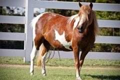 Horses2011-(48)