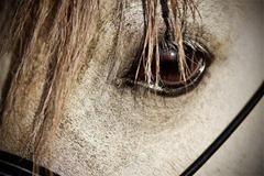 Horses2011-(54)