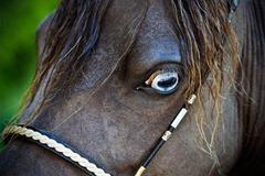 Horses2011-(55)