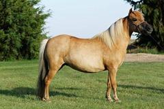 Horses2011-(71)