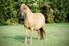Horses2011-(74)