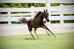 Horses2011-10_thumb1